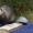 Озорные хорёчки. (щенки хорька - декоративного) #1169129