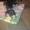 щенки такса в доюрые руки #1530895