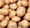 Картошка недорого