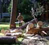 Удаление и обрезка деревьев в Томске
